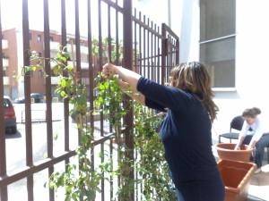 giardinaggio - 2